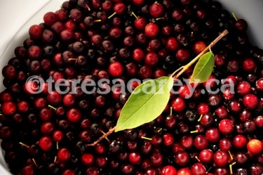 Berries 1 (Choke Cherries)