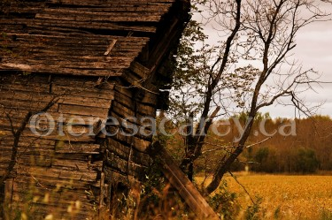 Barns & Buildings 5