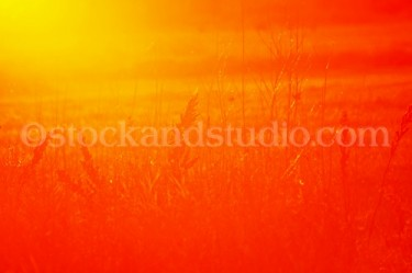 Grasses 1(Red Sunset)