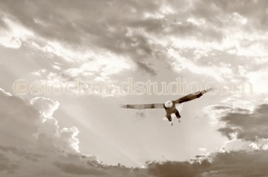 Eagle 1- Soaring From Open Heavens