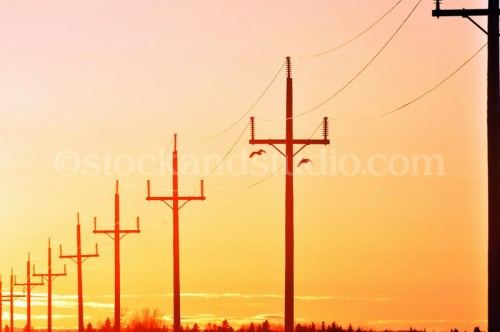 Pink & Orange Sunset With Hydro Lines in Silhouette