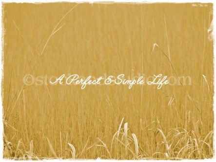 Golden Grasses With Inscription