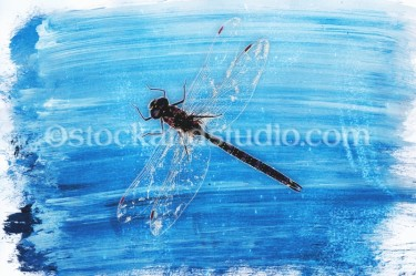 Art – Dragonfly on Blue Paint