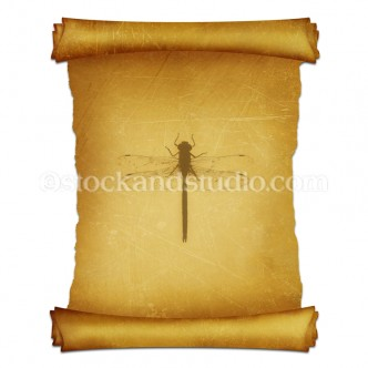 Dragonfly on Parchment Scroll