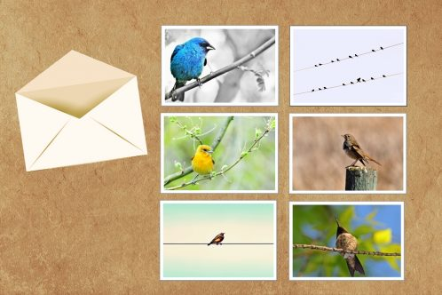 Greeting Card – Set of 6 – Bird Collection 1