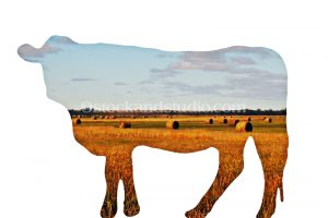 cow-cutout-filled3-800