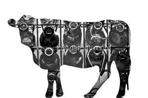 cow-cutout-filled7-800