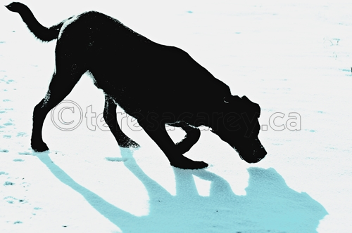 Black Dog with Shadow