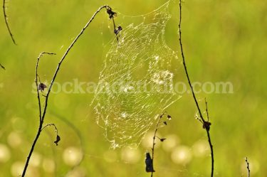 Spider Web – Green