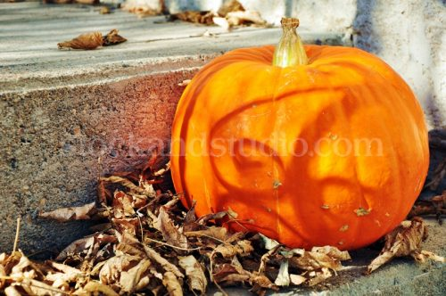 Pumpkin on Step