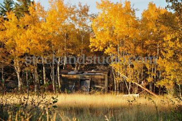 Old Shed In Field – Autumn