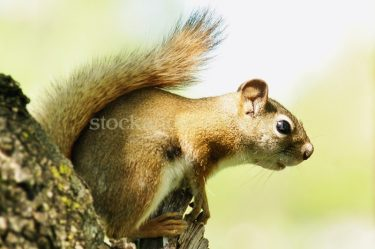 Squirrel Posed on Tree