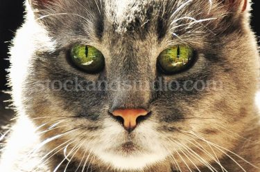 Belle – Green Eyes Close Up